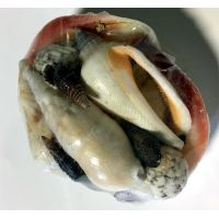 Sea Shells Decoration - Gifts For Women - Santa Shop Gifts